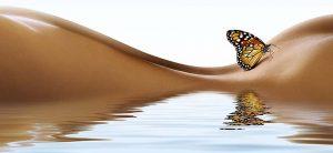 Brazilian Butt Butterfly